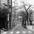 Photos: 武蔵小山 桜並木