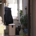 Photos: 武蔵小山 ポーズ