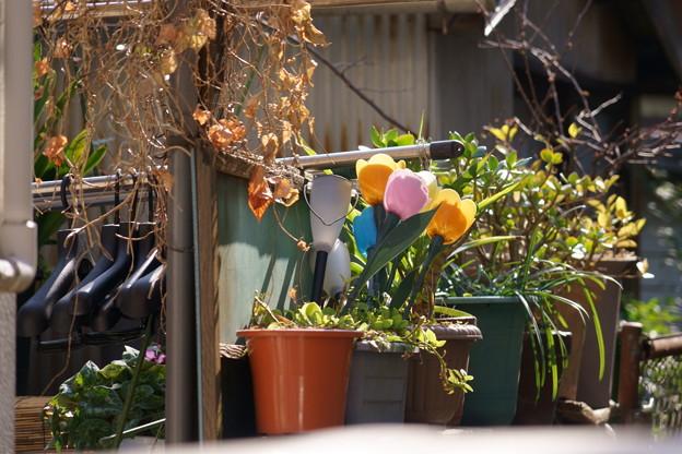 Photos: 武蔵小山 鉢植え