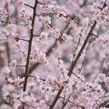 Photos: 遅咲き