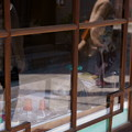 Photos: ガラス窓