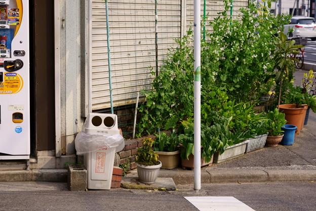 エンドウ豆の街角