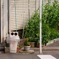 Photos: エンドウ豆の街角
