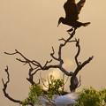 Photos: 鵜鷺