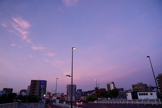 Photos: 紫がすぎる