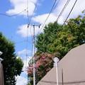 Photos: 坂の上の雲