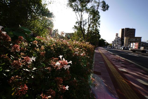 Photos: ハナ