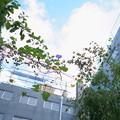 Photos: 空よ