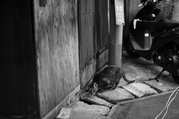 Photos: 大須賀 ネコ