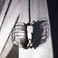 Photos: 昼行燈