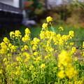 Photos: 春探し1