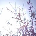 Photos: 光の春