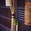 Photos: 竹の町