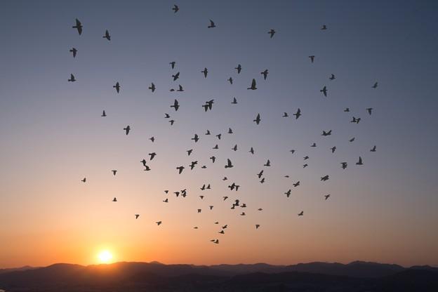 鳥よ飛べ!
