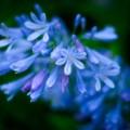 Photos: 路地裏の花