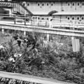 Photos: 雨の花園