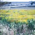Photos: 休耕田