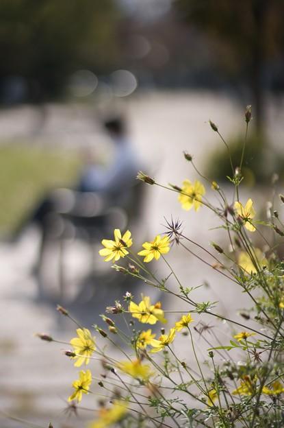 花は実になり実は花になる