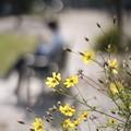 Photos: 花は実になり実は花になる