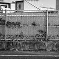 Photos: ざらざら
