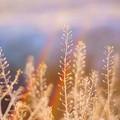 Photos: 霜とける