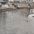 Photos: 安芸津36 三津大川