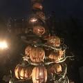 Photos: かぼちゃども