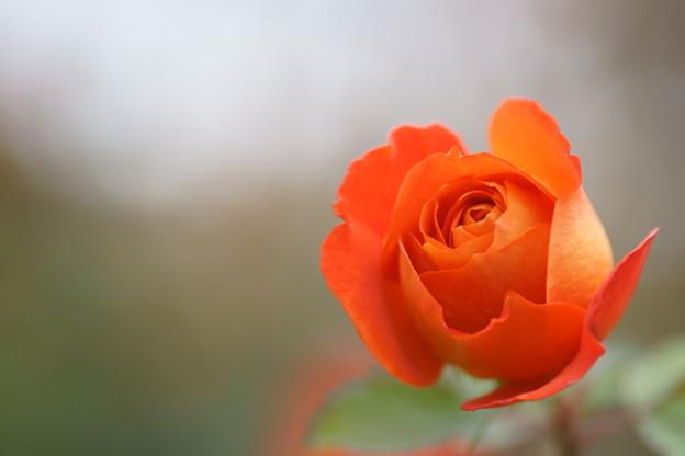 かわいい かわいい お花屋さん