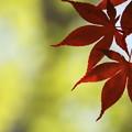 Photos: 赤い絆