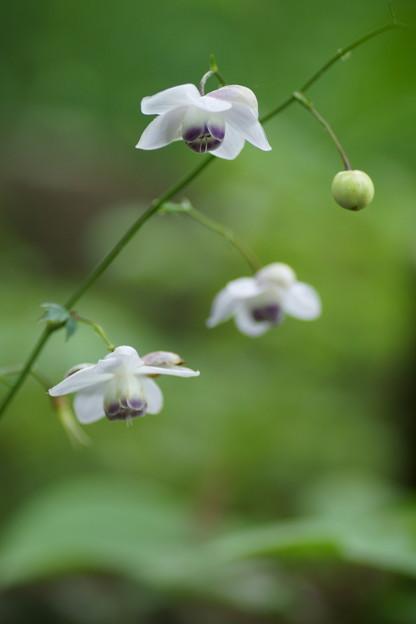 Photos: Mysterious Flower
