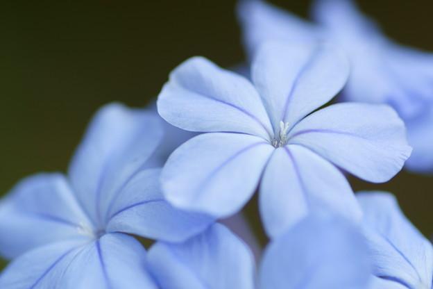 青いエアメイル