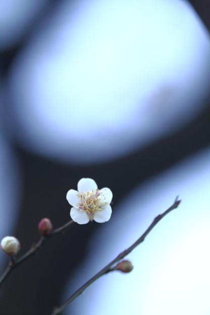 Photos: シアワセノカケラ