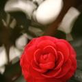 Photos: 愛という名の勇気