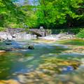 写真: 木漏れ日の面河渓