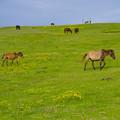 馬たちの楽園
