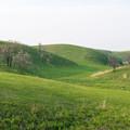 写真: 夕暮れの草原1