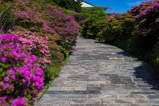 花咲く石畳の道