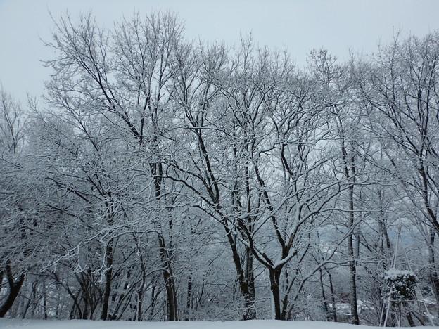 着雪・静寂