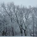 写真: 着雪・静寂
