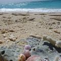7 貝殻と海