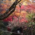 Photos: 紅葉1