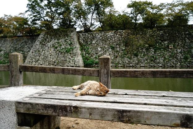 姫路城のにゃんこ (9)