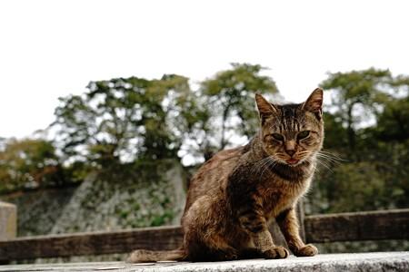 姫路城のにゃんこ (10)