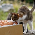 卵が食べたい (3)