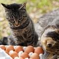 卵が食べたい (1)