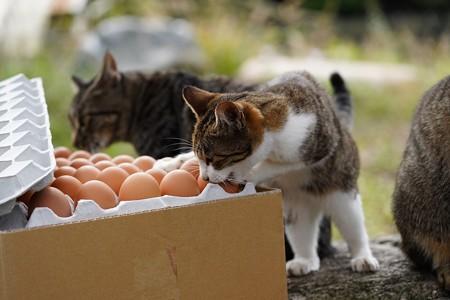 卵が食べたい (4)
