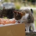 Photos: 卵が食べたい (4)