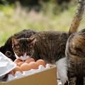 Photos: 卵が食べたい (2)
