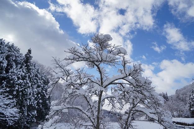 Photos: 雪見ドライブ (1)