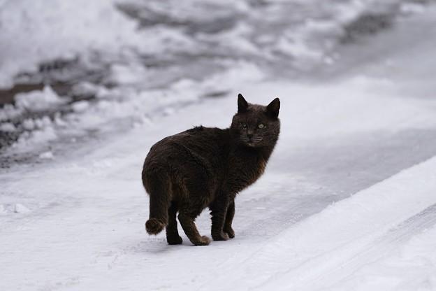 吹屋猫 (6)